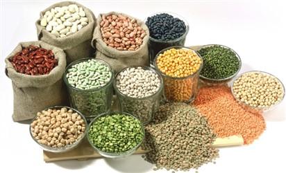 تولید کنندگان محصولات غذایی  بسته بندی حبوبات  رنگین دشت ناز